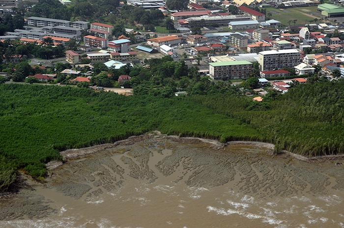 Mangrove en érosion devant Cayenne