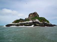 L'île du Grand Connétable, lieu de nidification pour de nombreuses espèces d'oiseaux marins © OChastel CNRS