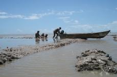 Expérimentation sur une vasière émergée, Macouria, juillet 2006