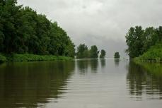Paysage de rivière, jeune mangrove, estuaire de l'Oyapock © FFromard