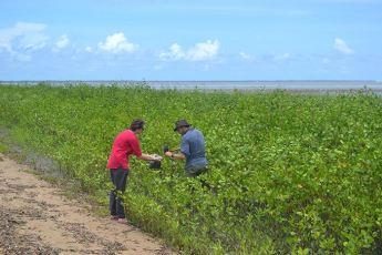 Prélèvements de contaminants organiques dans les sédiments, plage d'Awala © AGardel
