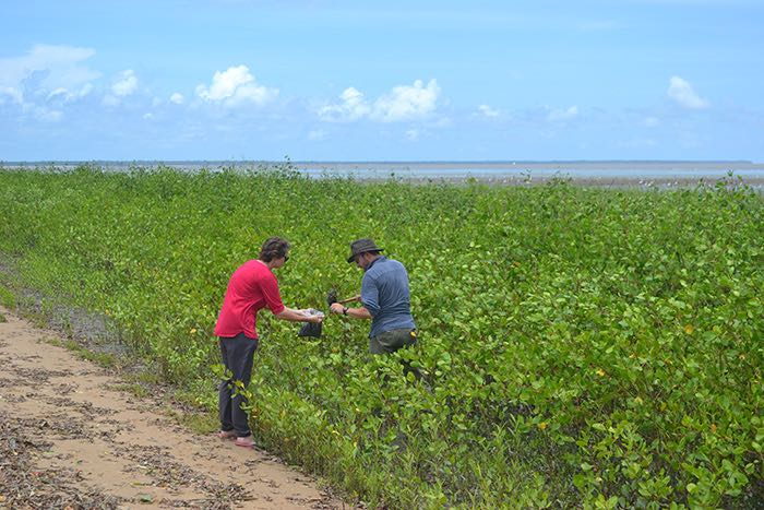 Prélèvements contaminants organiques dans sédiments plage © Awala AGardel